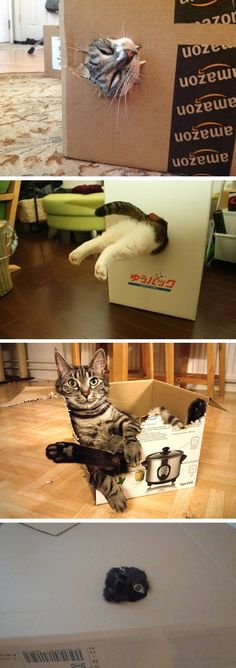 Cats In Boxes I always do this for my kitties when I buy something in a box….. makes for lots of laughs!!!