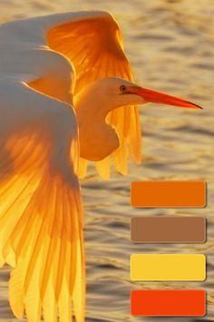 Color palette Orange Kleurinspiratie.nl