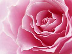 Somos Uma Só: Somosumaso no outubro rosa