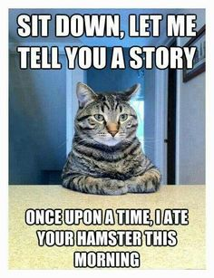 Best of Cat Shaming. cats admit to horrible things. Years ago our cat DID eat my daughters hamster! Cat Shaming, I Love Cats, Crazy Cats, Cute Cats, Funny Kitties, Grumpy Cats, Funny Cute, The Funny, Crazy Funny