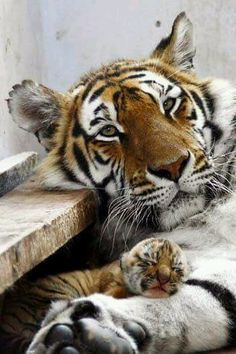 Animals 🙈 - Animals, animals wild, animals funny, animals cutest, animals and pets Animals And Pets, Baby Animals, Funny Animals, Cute Animals, Wild Animals, Animals Planet, Nature Animals, Beautiful Cats, Animals Beautiful