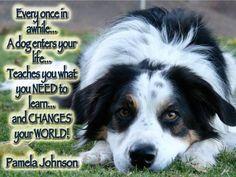 Dog Clicker Training, Dog Training Videos, Training Your Dog, Dog Hacks, Sea World, Dog Behavior, All Dogs, Border Collie, Dog Pictures