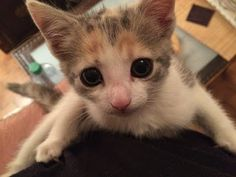 Kitten meets dog for the first time #caturday | Bright, shiny objects!