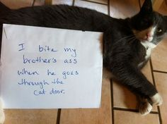 Cat Shaming from Pet Shaming .net – The New Dog Shaming Funny Cat Memes, Funny Cat Videos, Funny Dogs, Funny Animal Pictures, Funny Animals, Cute Animals, Animal Funnies, Wild Animals, Farm Animals