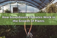 The greenhouse designed to keep a suitable climate condition inside the chamber to boost the growth of plants healthy and to increase the productivity of the plant. The artificial heating equipment, humidity controller, lights and ventilations are occupied to control the inside climate of greenhouse... - #climate #growth #greenhouse #plants #light #secrets #heat #maintaining