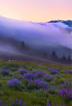 Hurricane Ridge, Olympic Mountains, Washington State - one of the most beautiful places on earth. Beautiful World, Beautiful Places, Beautiful Pictures, Beautiful Beautiful, Beautiful Flowers, Jolie Photo, Oh The Places You'll Go, Amazing Nature, Beautiful Landscapes