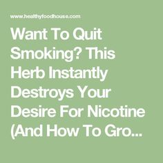 Want To Quit Smoking? This Herb Instantly Destroys Your Desire For Nicotine (And How To Grow It)