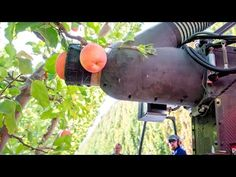 new fruit-picking robot could eliminate demand for illegal immigrants in American agriculture: BASED SCIENCE American Agriculture, How To Become Smarter, Fruit Picking, Apple Farm, New Fruit, Best Fruits, The Creator, Scientific American, Harvester
