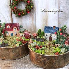 1 million+ Stunning Free Images to Use Anywhere Succulent Gardening, Succulent Pots, Planting Succulents, Dish Garden, Garden Art, Mini Fairy Garden, Little Gardens, Sola Flowers, Succulent Arrangements