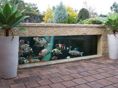 Carpes koï dans le bassin à poisson moderne- 40 maisons d'architecte sublimes