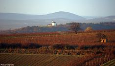Wine Sale, Replant, Wine Making, The Locals, Wines, Acting