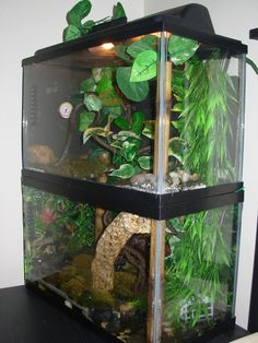 Let's see those Frog and Toad Enclosures! - Page 2