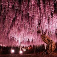Kawachi Fuji Garden, Japan - World's Most Inspiring Places