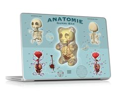 Gummi Anatomie