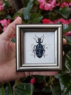 Tiny Violet Oil Beetle Framed Giclée Print Or Violet, Unique Gifts, Handmade Gifts, Bird Prints, Nymph, Beetle, Printing Process, Planting Flowers, Giclee Print