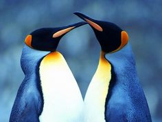 Here are some adorable pictures of animals kissing to brighten your day. Penguin World, Penguin Life, Deer Wallpaper, Rabbit Wallpaper, Penguin Images, Penguin Pictures, Animals Kissing, Cute Animals, Badger Images