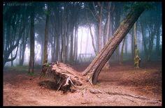 Foto de MaraSarmentoPhotography  Caminhos & Labirintos