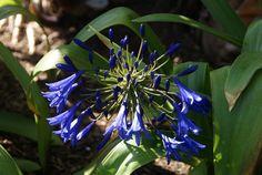 Organic Garden Dreams: Garden Happenings in July