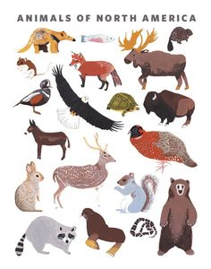 Animals of North America Print Small Adventure is devoted to creating beautifully illustrated artwork that explores nature, traveling and exciting stories. Illustrated in gouache by Keiko Brodeur. Fea