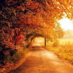 A beautiful road, or portal, to where?