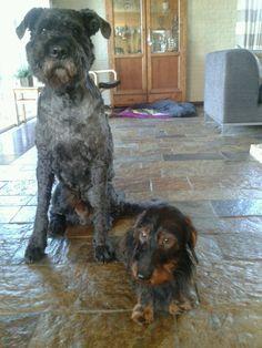Onze boef Milo en teckel Moos.  Leuk duo!