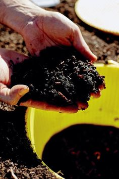 This method of small garden composting works by creating an underground worm plunger: compost your scraps and create soil feeding worm castings in the soil.