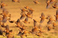 Sparrow Team by Alex Rakó, via 500px
