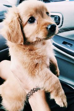Cute dogs and puppies - Funny Dog Top Tiny Puppies, Cute Dogs And Puppies, Baby Dogs, Doggies, Puppies Tips, Cute Tiny Dogs, Shitzu Puppies, Super Cute Dogs, Mastiff Puppies