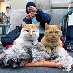 Deux chats sur le chien en Place de la Madeleine. Got that dog under control. Your turn next!