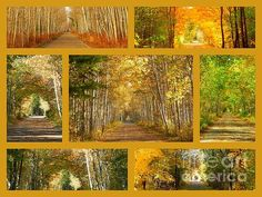 My Trail by Karen Cook - As you know, one of my favorite places to walk is the Mill Yard Trail, as it meanders through the #Annapolis Valley of Nova Scotia. Beautiful at anytime of the year, it is spectacular throughout the #Autumn months. The leaves change from green to gold and then to oranges as they say goodbye to the trees for another year and wait for winter's approach. I hope you enjoy my tribute to my trail as much as I do.