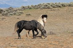 mustang horse pictures | Wild Horse Mustang Wild horse or mustang
