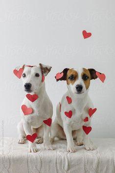 dog photoshoot with owner ; dog photoshoot ideas with owner ; dog photoshoot at home Valentines Day Dog, Dog Calendar, Dog Best Friend, Photo D Art, Cat Photography, Photography Couples, Dog Birthday, Little Dogs, Pet Shop