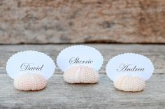10 Beach Wedding Natural Pink Sea Urchin Shell Place Card Name Holders - Reception Table Chic Decor - Guest Escort Favor Ocean Nautical on Etsy, $20.66 AUD