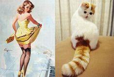 Algunos gatitos parecen totalmente confudidos, esto al menos creen que son modelos de los años 50 al menos eso es lo que parece tras verlos posar así de lindos. Esperamos que estas fotos te alegren el día.