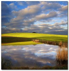 Canola Reflections (Panorama) Location: Vissershok road in Durbanville Provinces Of South Africa, Felder, Landscape Photographers, Wine Country, Cape Town, Location, Beautiful Places, Scenery, Places To Visit