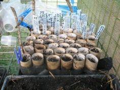 Frugal Gardening - 5 Thrifty Recycling Ideas! :) its almost tiiiiiiiime......
