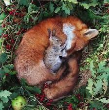 Resultado de imagen para foxes baby