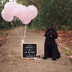 Family Dog #pregnancy Announcement Idea for Valentine's Day
