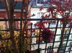 "photo: Barbara Van Dyck    voici la photo de ma fenêtre. ""Fenster zum Hof"""