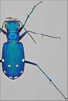 Storing & Relaxing Beetles