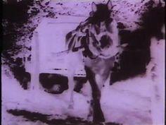 Le Film est déjà commencé ? (Maurice Lemaître) Maurice, Diorama, Film, Dogs, Artist, Animals, Movie, Animales, Films