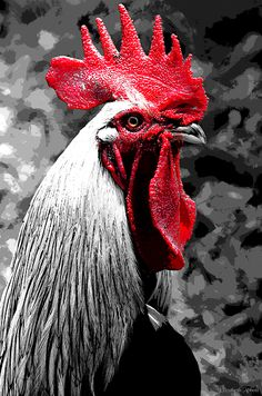 Red Black And White Rooster by Elizabeth Abbott #rooster #portrait