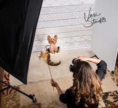 Book a Photo session for your best four-legged friend with International Award Winning #Photographer! #palmbeachgardens #palmbeach #westpalmbeach #Jupiterisland #pet-portrait #portrait For more information, Call Vasi #Studio at 561.307.9875 or drop an e-mail to: info@vasistudio.com #petsphotography #petsportrait #dog #familyphotographer #petphotographer #petlove #animalphotographer #catphotographer #toppetphotographer #florida #Stuart #BocaRaton