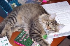 Baxter not catching up on his reading.