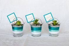 Step-by-step Modern DIY Succulent Pail Favors