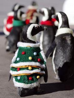 Cute Christmas Penguins   Cutest Paw