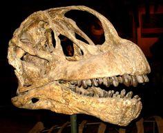 brontosaurus skull - Google Search