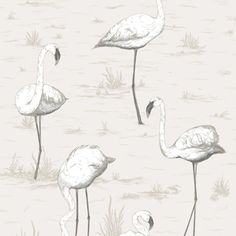 wallpaper Flamingos 95/8046 - Contemporary Restyled - Cole & Son