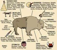 Uses for every part of the animal! <-- My grandparents had a buffalo farm when I was growing up. My granny used every bit of that animal so that there was no waste. :)