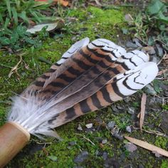 Smudging Fan  Kookaburra feathers   tool by NaturesArtMelbourne,